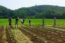 Hikers working on organic farm